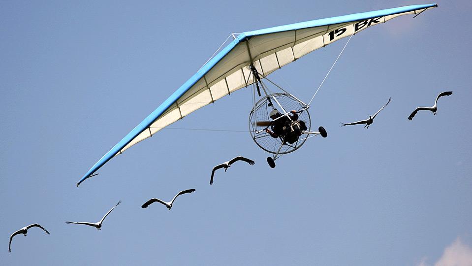 Пилот сверхлёгкого летательного аппарата француз Кристиан Муллек летит вместе со стаей журавлей во время воздушного шоу в немецком городе Langenselbold, 13 июня. (REUTERS/Johannes Eisele)