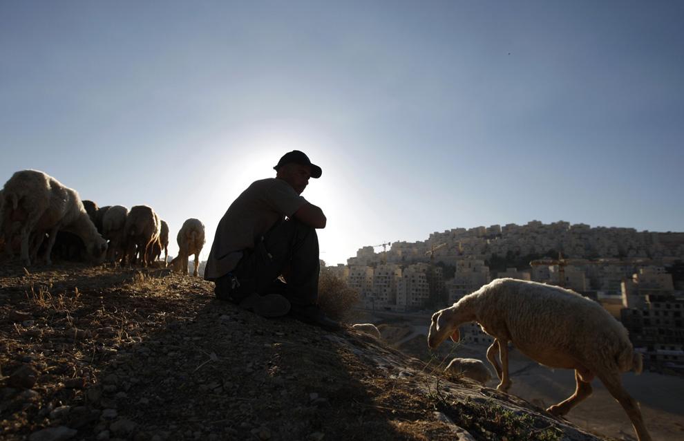Palestina gembala sedang duduk dengan domba-dombanya di sebuah permukiman Yahudi dekat Yerusalem, yang Israel sebut Har Homa dan Palestina - Jebel Abu Ghneim.  Gambar diambil 14 Juni 2009.  (REUTERS / Ammar Awad)