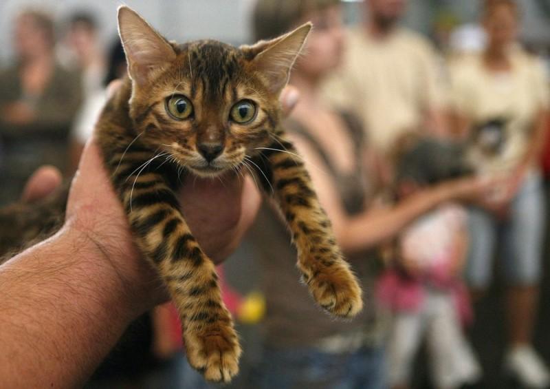 Выставка кошек в Праге