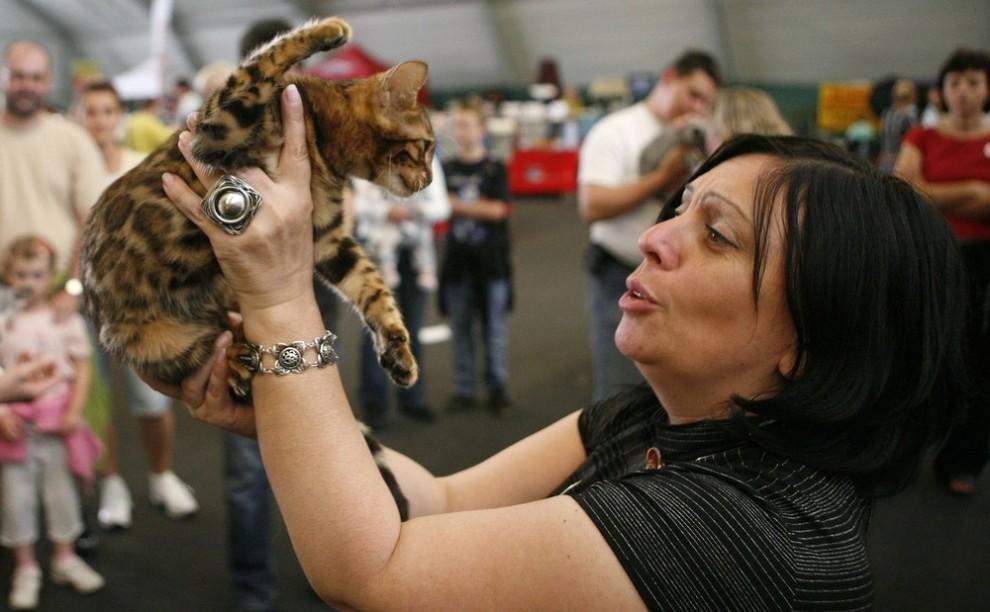 ) Один из членов жюри осматривает кошку во время двухдневной международной выставки в Праге, которая проходит в эти выходные. Снимок сделан 25 июля 2009. (REUTERS/David W Cerny)