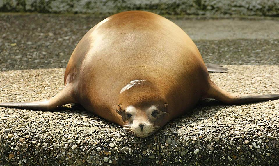 Смешные толстые животные фото