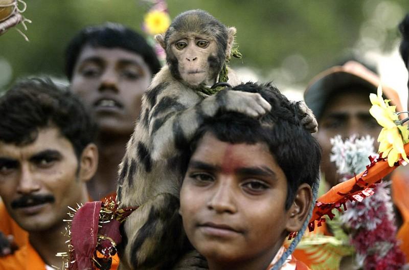 4) Мальчик-индус с обезьянкой на плече во время ежегодного паломничества на реку Ганг в индийском городе Аллахабад. (Rajesh Kumar Singh/Associated Press)