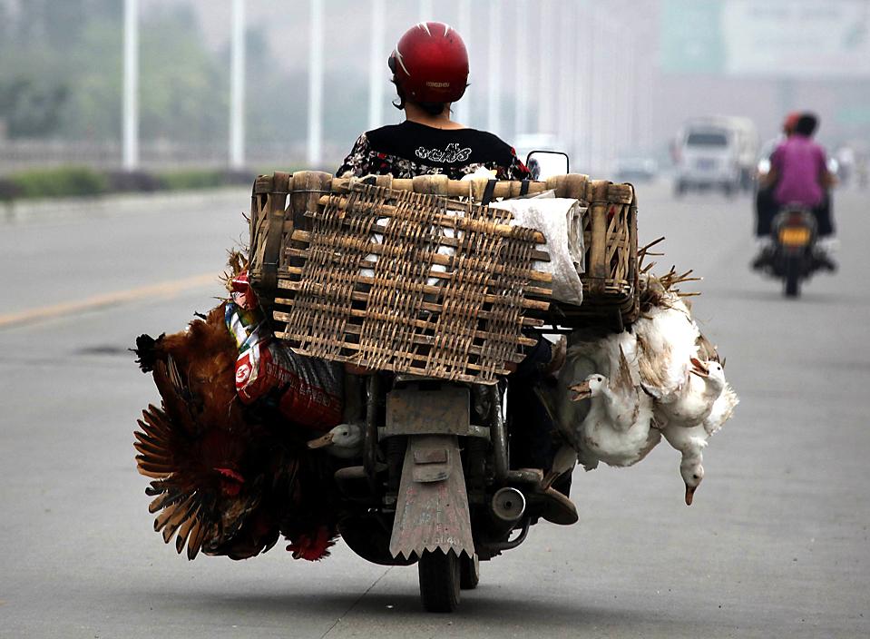 7) Женщина едет на мотоцикле китайском городе Лешань, провинция Сычуань. (David Gray/Reuters)