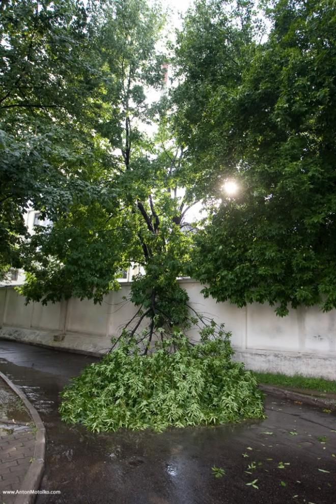 10) Стихия повредила дерево.