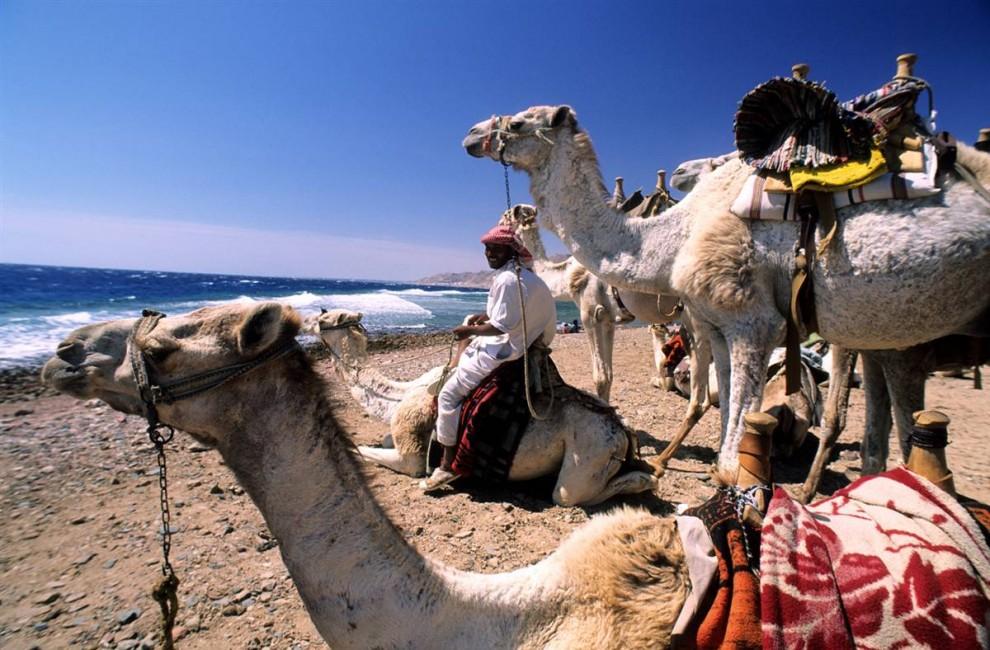 21) Верблюды на берегу Красного моря на пляже Каньон в Дахабе. Сафари на верблюдах – одно из самых популярных развлечений в Южном Синае. (Bertrand Gardel/Hemis.fr)