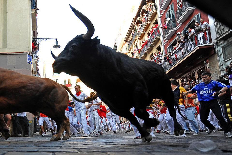 Фото злых и больших быков