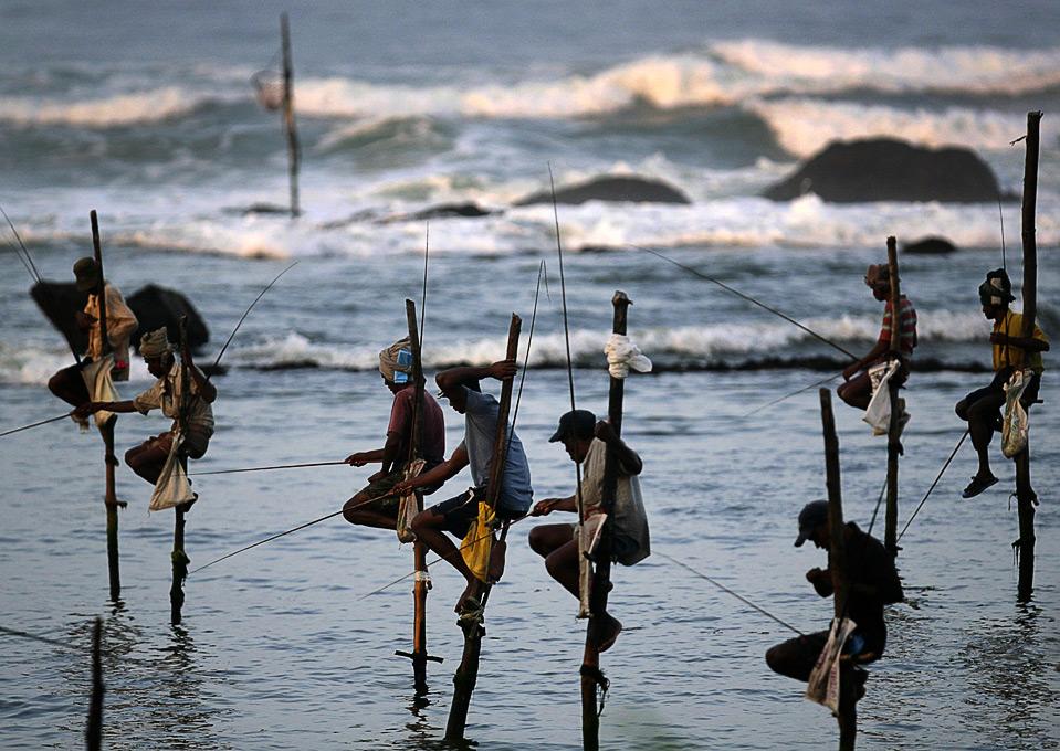 16) Рыбаки сидят на шестах в заливе у шриланкийского города Коггала. Подобная рыбалка – традиционный способ местных жителей заработать на пропитание. Каждый такой шест передается по наследству из поколение в поколение. (REUTERS/Vivek Prakash)