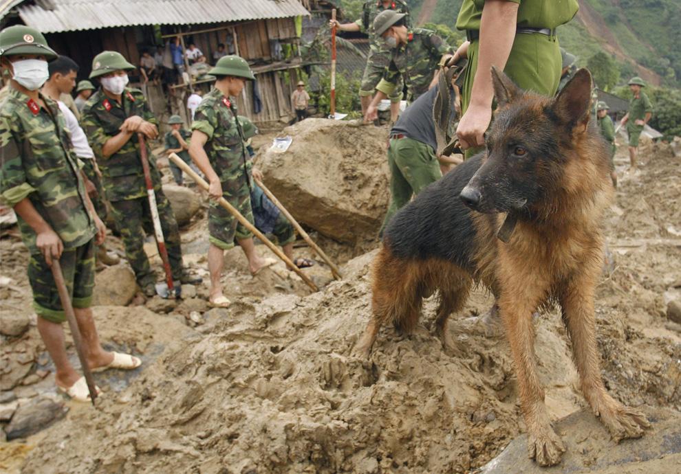 ) Поисковая собака ищет людей под завалами в деревне Khen Len во вьетнамской провинции Бак Кан, на которую сошел оползень, 7 июля 2009. В результате наводнения на севере страны погибли 34 человека. (REUTERS/Kham)