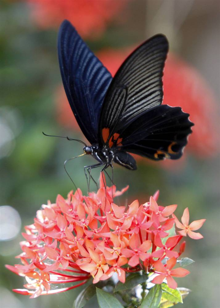 15) Бабочка на цветке в провинции Нахон Саван в Таиланде. (Chaiwat Subprasom/Reuters)