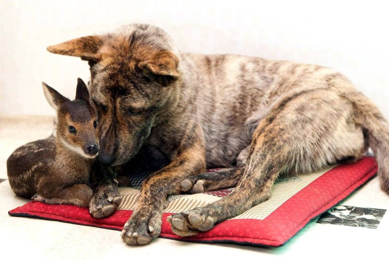 Разные собаки и другие фото братьев наших меньших