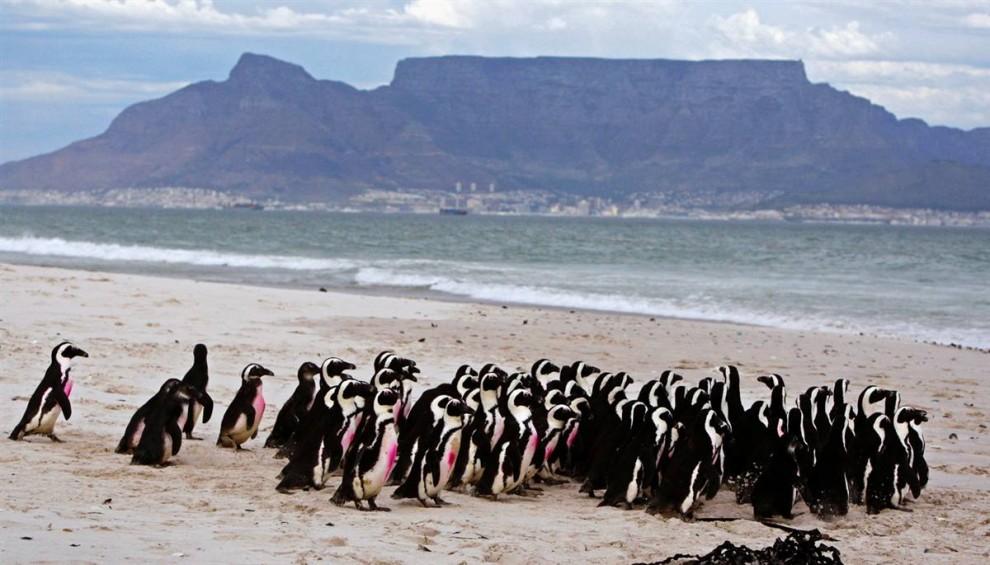 ) Эта гора с плоской вершиной является визитной карточкой Кейптауна, ЮАР. Она является самым популярным местом для посещения в Национальном Парке «Столовая Гора». (Schalk Van Zuydam / AP)