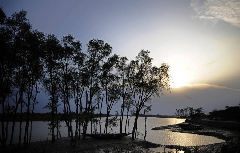 """) Индийский национальный парк Сандербанс, расположенный на низинных землях в Бангладеше и Западной Бенгалии, это самый крупный мангровый лес на планете. """"Sundarban"""" (Сандербан) в переводе с бенгальского значит «красивые джунгли» или «красивый лес». (Munir Uz Zaman / AFP - Getty Images)"""