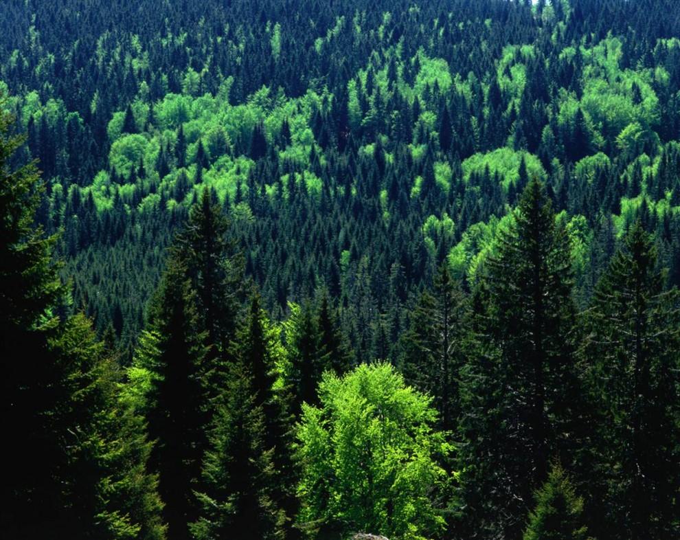 ) Расположенный на востоке реки Рейн между немецким Карлсруэ и швейцарским Базелем Черный Лес – это вечнозеленые леса и огромные поля. Цитируя сайт Lonely Planet - «Это не только дикая природа, но и живописная сельская местность». (Bruce Esbin / Lonely Planet)