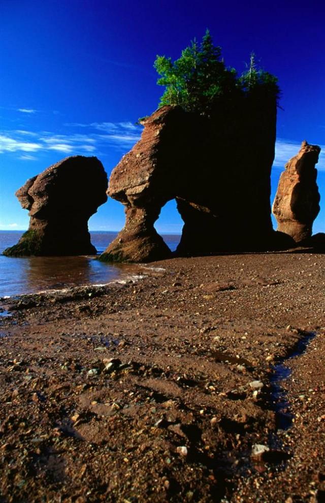 ) Самые большие приливы на планете в заливе Фанди сформировали уникальную экосистему. Кроме того, это рай для мигрирующих птиц, здесь всегда полно пищи. (Cheryl Forbes / Lonely Planet)