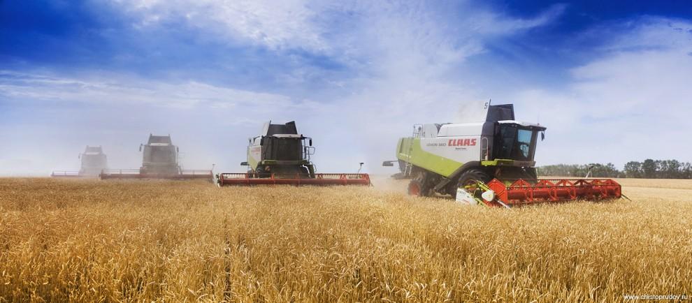 3) Обычно на одном поле трудится не один, а сразу несколько комбайнов. Так проще обслуживать технику и вывозить урожай.