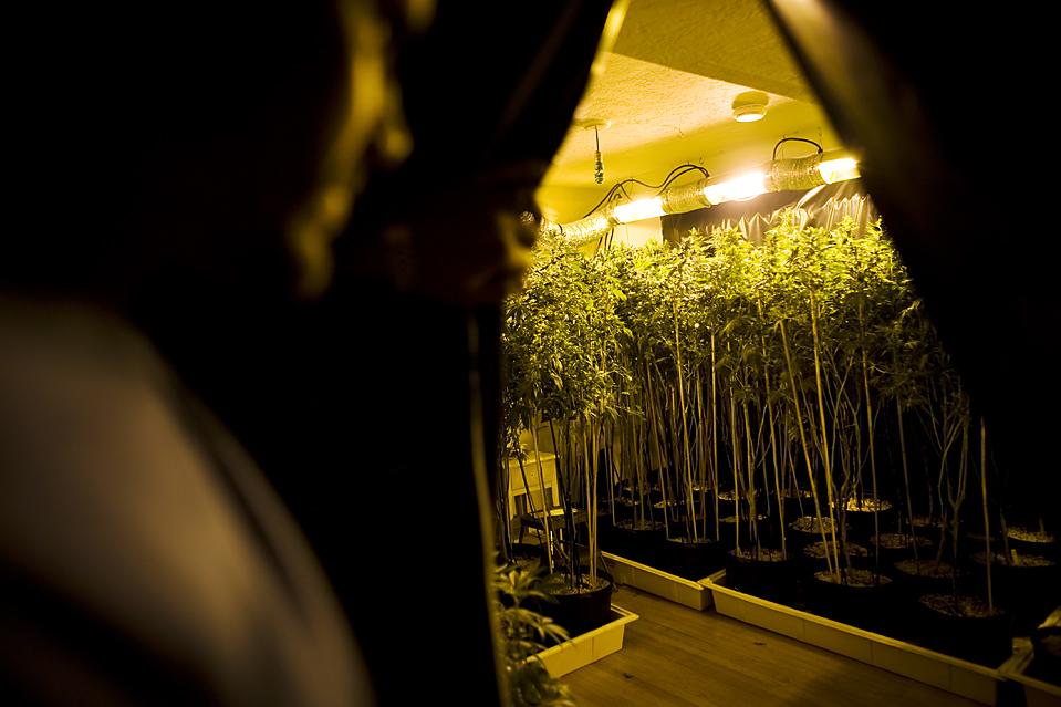 1. Группа пациентов, принимающих марихуану в лечебных целях, выращивают марихуану в своем доме в Окланде, штат Калифорния,. (Justin Maxon for The Wall Street Journal)