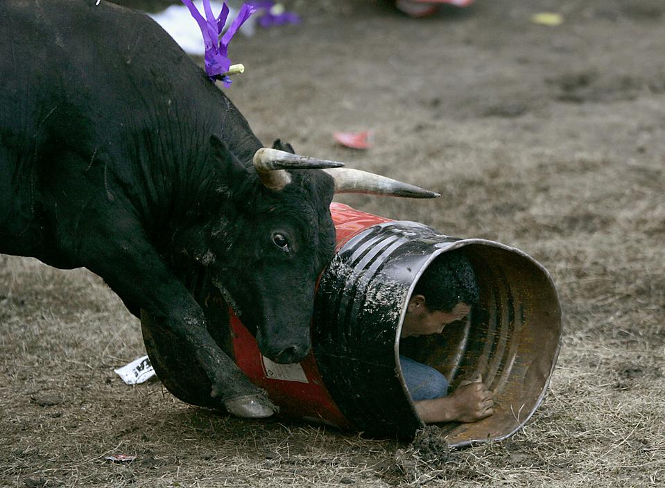 7) Бык толкает металлическую бочку с человеком внутри во время традиционного фестиваля Corralejas в колумбийском городе Сабанета. (Albeiro Lopera/Reuters)