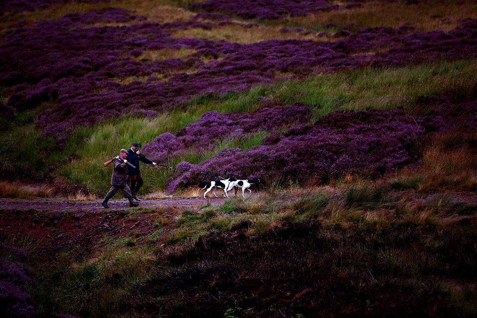 8) Иан Эллиот и Адам Смит идут в шотландском местечке Horseupcleugh, в понедельник, перед началом сезона охоты на куропаток. (Jeff J. Mitchell/Getty Images)
