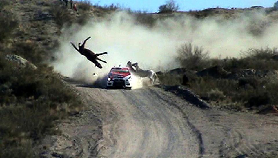 """5) Пилот Федерико Вильягра врезался в дикую лошадь на своем """"Мицубиси"""" во время Ралли Аргентина в Южной Америке. (DyN-Prensa Rally Argentina/Reuters)"""
