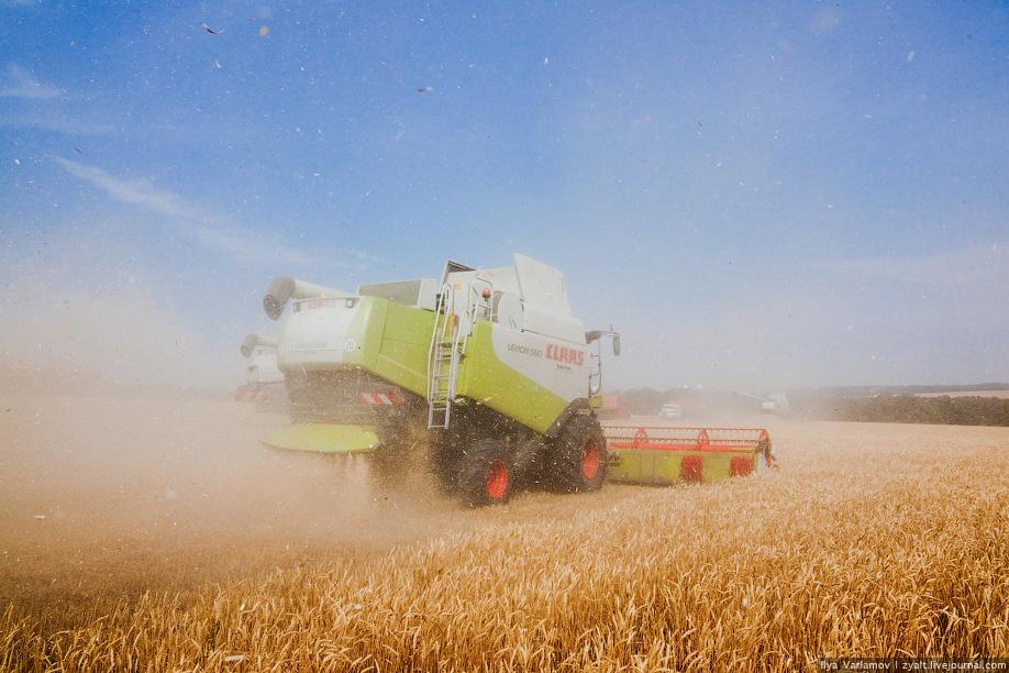 8)  Нам очень повезло, что мы попали на уборку пшеницы, а не ячменя. Те, кто знает, что такое сборка ячменя нас поймут.
