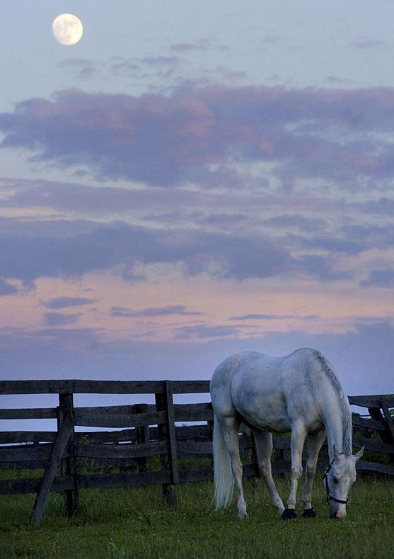 11) Конь щиплет траву на фоне восходящей луны в поле Блумсбурга после грозы, которая прошлась в этом регионе на закате 16 июня 2008 года. (Jimmy May, Bloomsburg Press Enterprise/ AP)