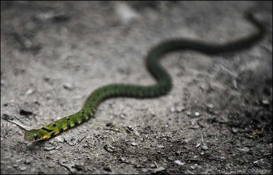 Обычно змеи избегают хоженых туристических троп.