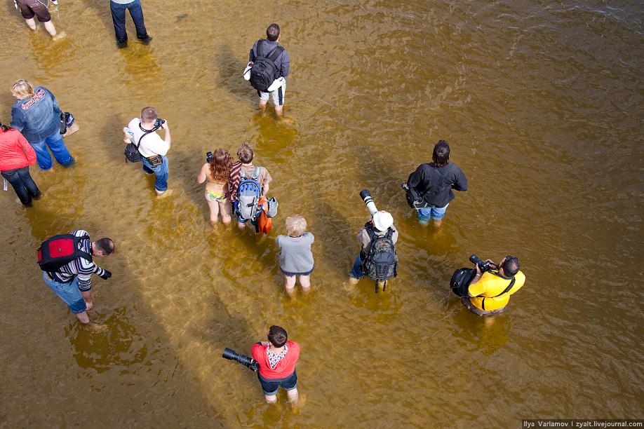 14) Фотографы стоят по колено в воде.