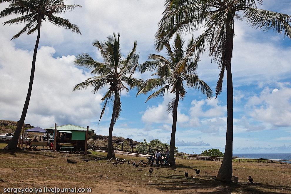 16) Любимое блюдо местных жителей - курица. Они бегают прямо между пальмами и туристами. Именно курицу подают в местных шашлычных.