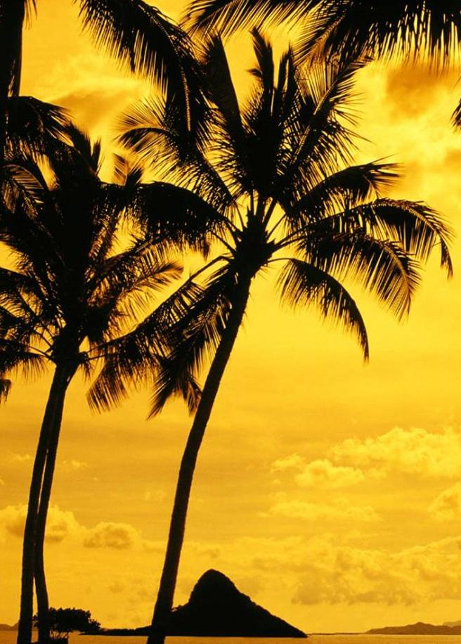 19. Мауна-Ки – самая высокая гора на планете – от морского дна до самой вершины это чудо природы достигает до 10 203 м. На вершине находится обсерватория Мауна-Ки.