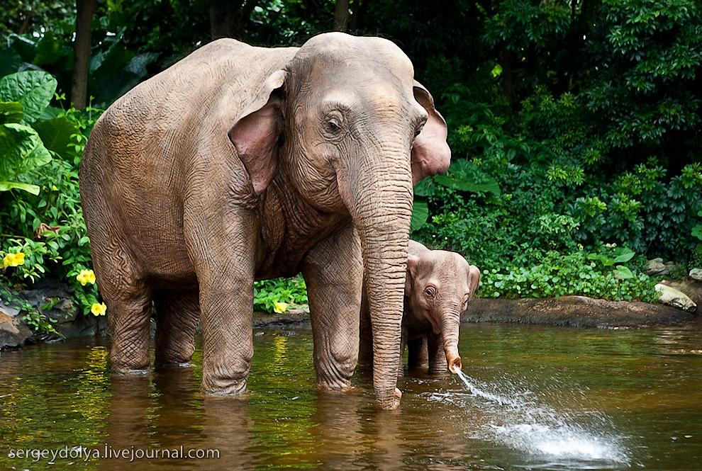 24) В последней зоне - Adventureland'е - можно отправится в речной круиз по африканской реке.