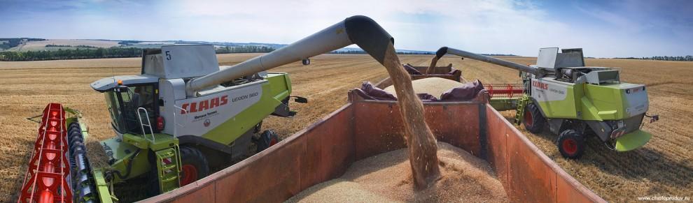 16) Если внезапно пойдет дождь, зерно укроют непромокаемым тентом, который сейчас свернут.
