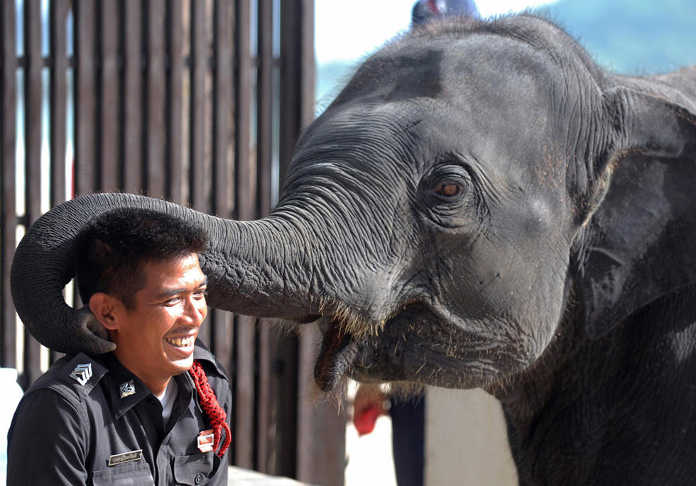 25. Слоненок играет с тайским полицейским перед 42-ой встречей министров Южноазиатских наций на Пхукете, Тайланд, 19 июля. (Pornchai Kittiwongsakul/AFP /Getty Images)