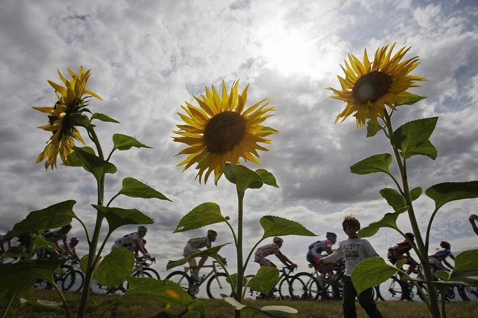 35. Велогонщики, среди которых  - Эгой Мартинес из Испании в своей куртке в крапинку, проезжают мимо поля с подсолнухами во время десятого этапа Тур де Франс, что составило более 120,9 миль через центральную Францию 14 июля. (Bas Czerwinski/AP)