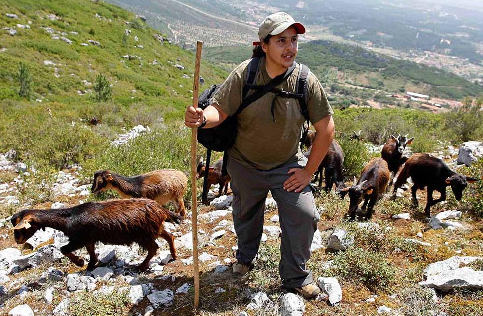 37. Руи Дюке пасет козлов в горах неподалеку от деревни Хаос в центральной Португалии. В Хаос разводят козлов, чтобы сохранить популяцию зависящих от них красноклювых клушиц. (Jose Manuel Ribeiro/Reuters)