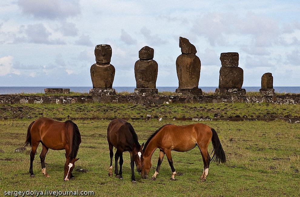 40) Флора и фауна острова Пасхи оставляют желать лучшего. Все деревья на острове были вырублены еще первыми поселенцами.