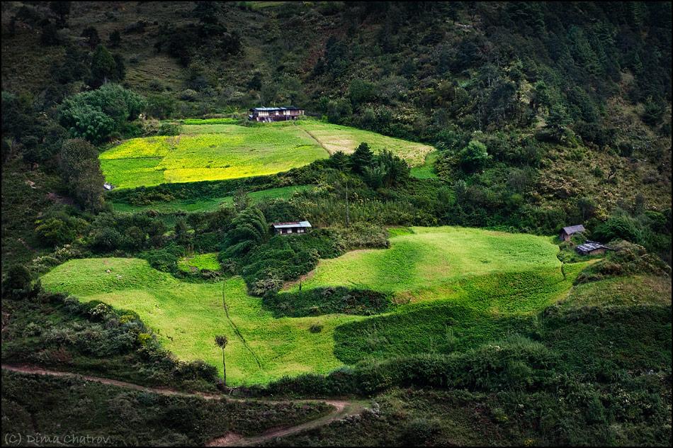 5) Центральный Бутан, фермерское хозяйство на горных склонах. В Бутане запрещены охота и вырубка лесов (нарушителю грозит пожизненное заключение без права апелляции), и стоит сойти с тропинки, как тут же попадаешь в настоящее буйство непролазной зелени...