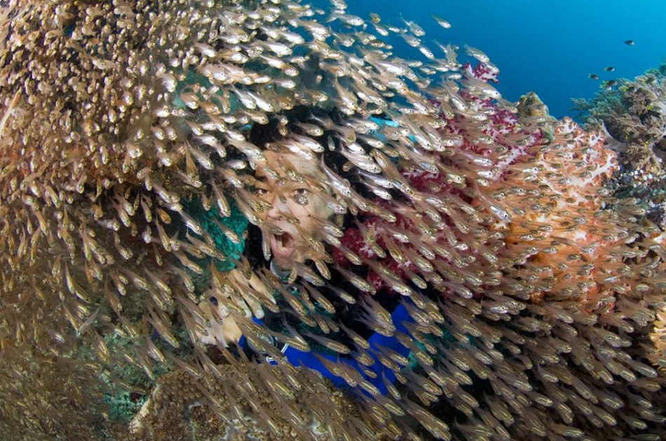 6) На этом снимке: дайвер и золотистые большеглазы на островах Раджа-Ампат, Западное Папуа, Индонезия. «Исследуя мягкие коралловые острова Джэм, мы с Альберто Рейя (на снимке) наткнулись на многочисленную стаю золотистых большеглазов. К моему удивлению, мой товарищ снял маску и регулятор и, открыв рот, сунул голову прямо в эту стаю. Я успел сделать пару снимков, пока мой смех, наконец, все не испортил», - рассказывает фотограф Джефф Йоновер. (Jeff Yonover, Nature's Best Photography)