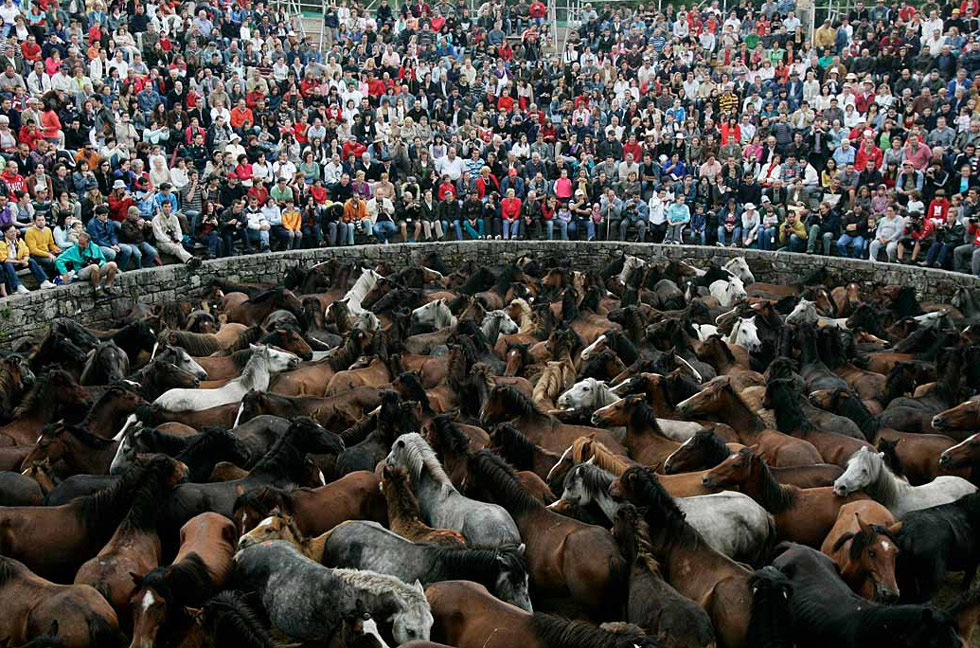 22) Сотни диких лошадей собраны для события «Рапа Дас Бестас» в деревне Сабучедо, Испания, 5 июля. В первые выходные июля в разных деревнях в северо-западном районе Галиция собирают диких лошадей, которых купируют и объезжают. (Miguel Vidal/Reuters)