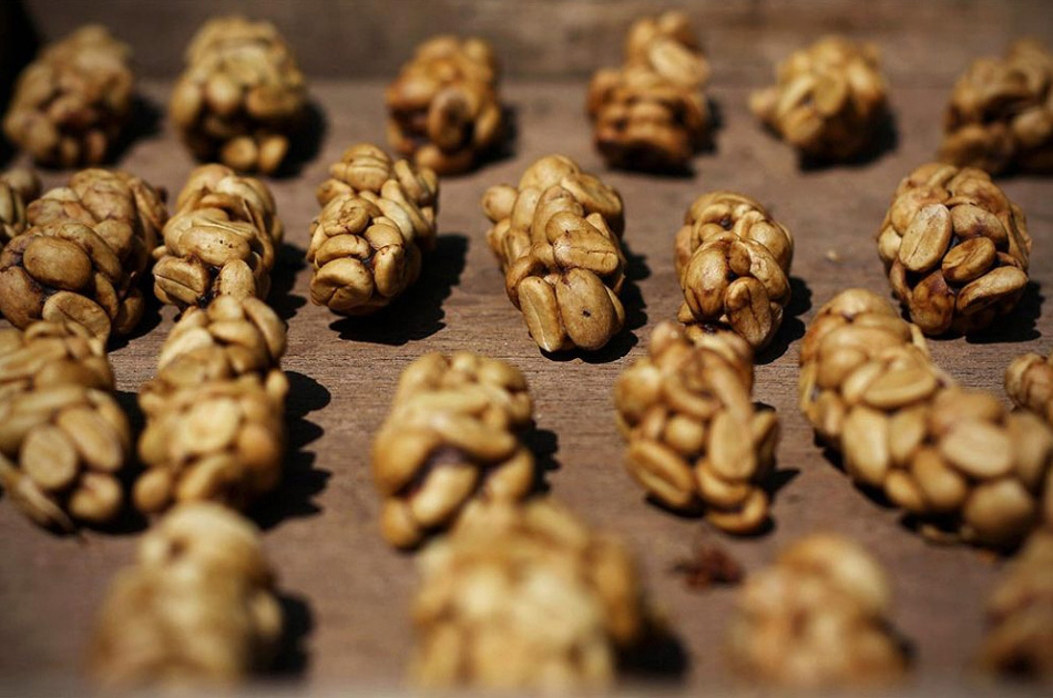 8) Экскременты циветты готовят для производства кофе сорта «Kopi Luwak» в Бондовозо 11 августа, на Восточной Яве, недалеко Сурабая, Индонезия. (Ulet Ifansasti/Getty Images)