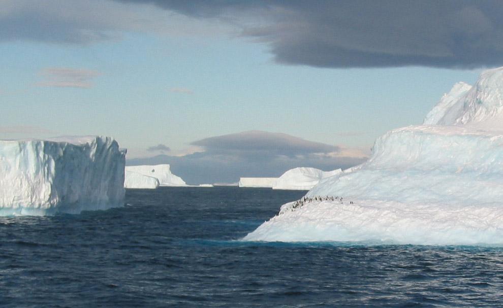 Виды Антарктиды
