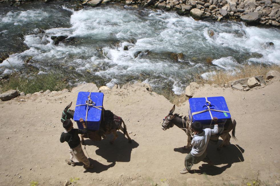 1) 1. Афганские  мальчишки везут на ослах избирательные урны в отдаленные районы деревни Баба Али, округ Дара в провинции Панджшир, к северу от Кабула,, в понедельник, 17 августа. Правительство Афганистана отправило в горы караваны ишаков с избирательными урнами и бумагами для голосования, чтобы люди смогли голосовать даже в самых отдаленных районах. Мулов нагрузили пластиковыми стульями, столами, десятками запечатанных белых пластиковых избирательных урн, 600 бюллетенями для афганских президентских выборов и еще 600 для проходящих параллельно провинциальных выборов. (AP/Rafiq Maqbool)