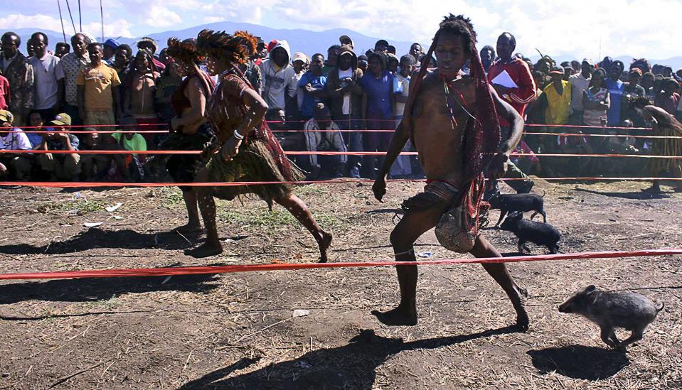 12) Женщины - члены племени папуасов, преодолевают дистанцию вместе со своими поросятами во время традиционной гонки свиней на фестивале в долине Балием, Индонезия, 10 августа. Фестиваль проводится ежегодно перед 17 августа – Днем Независимости Индонезии, с целью поддержки традиционной культуры племен. (AP Photo)