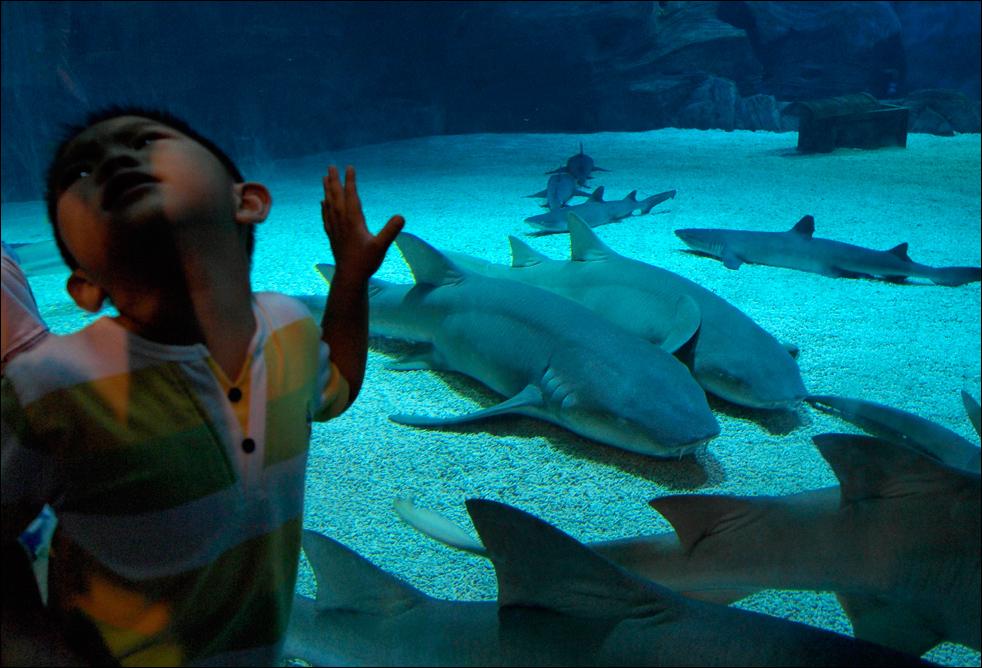6. Реакция ребенка на акул, которые отдыхают на дне аквариума в водном зоопарке в Пекине, в среду 12 августа.  (AP/Ng Han Guan)