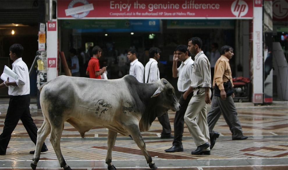 32) Буйвол и другие пешеходы проходят мимо компьютерного магазина в Нью-Дели 19 сентября 2008 года.