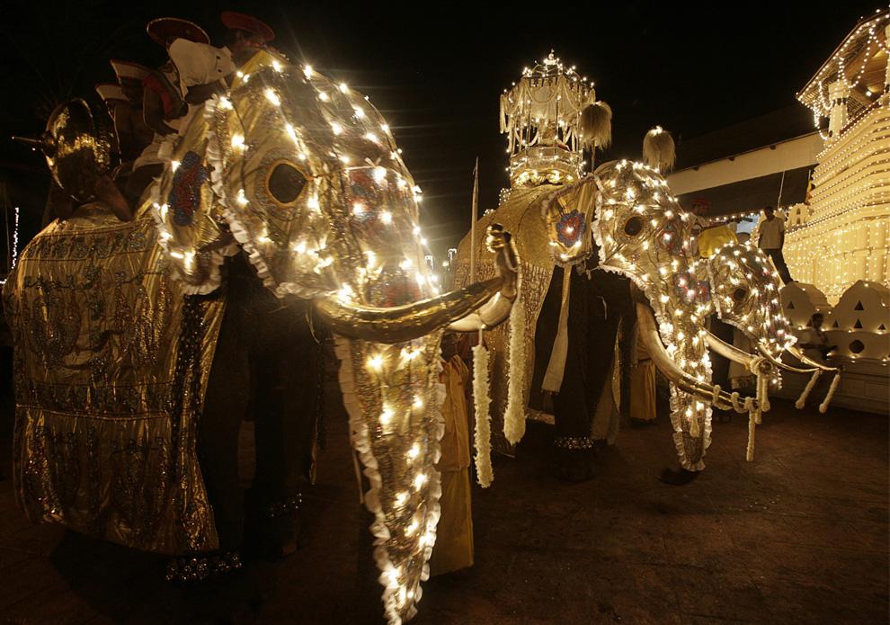 12. Три слона, включая того, который несет на себе емкость с реликвией – зубом Будды (в центре), стоят перед храмом Шри Далада Малигава (храм Зуба Будды) во время фестиваля Эсала Перахера в Канди, Шри-Ланка, 5 августа 2009 года. (REUTERS/Vivek Prakash (SRI LANKA RELIGION ANNIVERSARY SOCIETY)