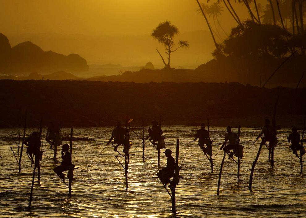 22. На этом снимке, сделанном в среду 8 июля 2009 года, рыбаки Шри-Ланки, так же известные здесь, как рыбаки на палках, сидят на своих ходулях, воткнутых в дно океана, в округе Коггала к югу от Галле, Шри-Ланка. (AP Photo/Gurinder Osan)