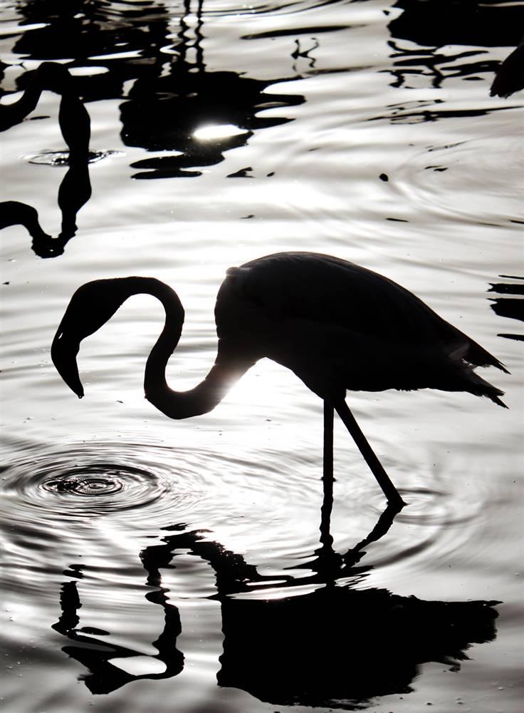 5) Фламинго кормится в неглубоком бассейне в парке дикой природы Аль-Арин в городе Сахир, Бахрейн. Температура в тот день в Бахрейне достигла 42 градусов Цельсия. (Hasan Jamali/AP)