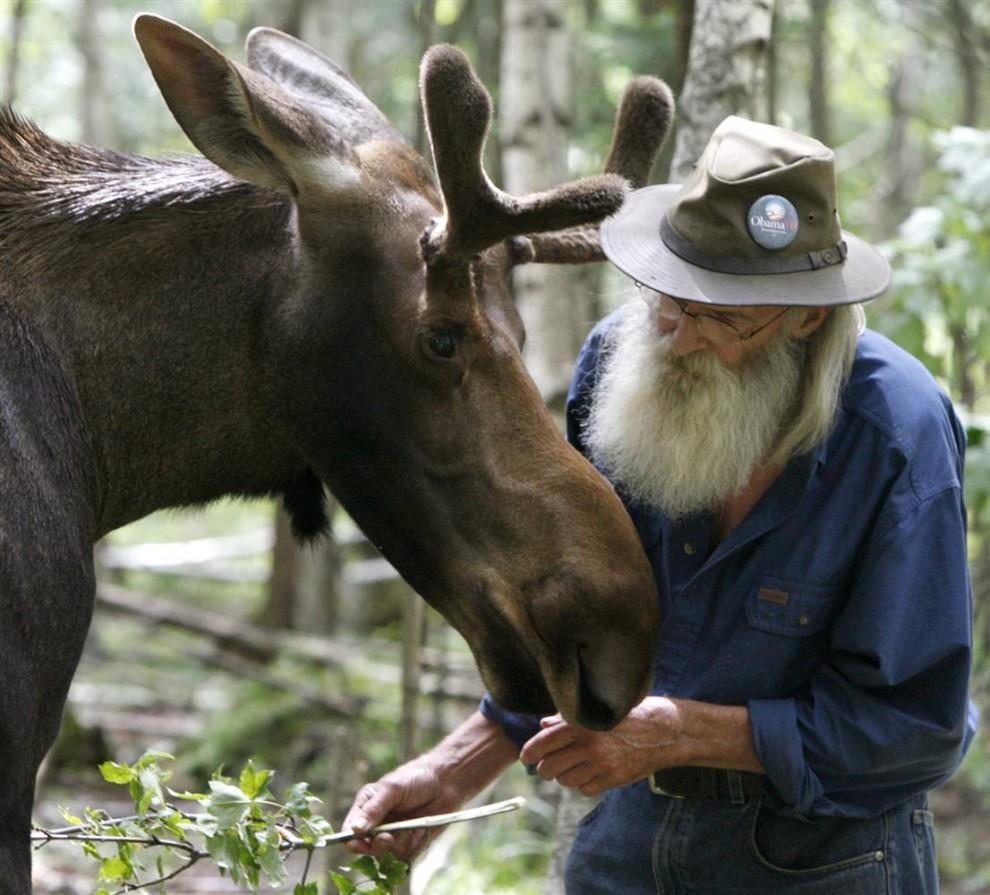 6) Дэвид Лоуренс разговаривает с лосем по кличке Пит. Снимок сделан в Ирасбурге, штат Вермонт. 73-летний Лоуренс, выходил и вырастил Пита, которого в младенчестве чуть не загрызли собаки.  (Toby Talbot/AP)
