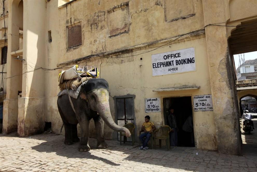 10. Мужчина ждет клиентов желающих прокатиться на слоне в индийском городе Джайпур. (Jorge Silva/Reuters)