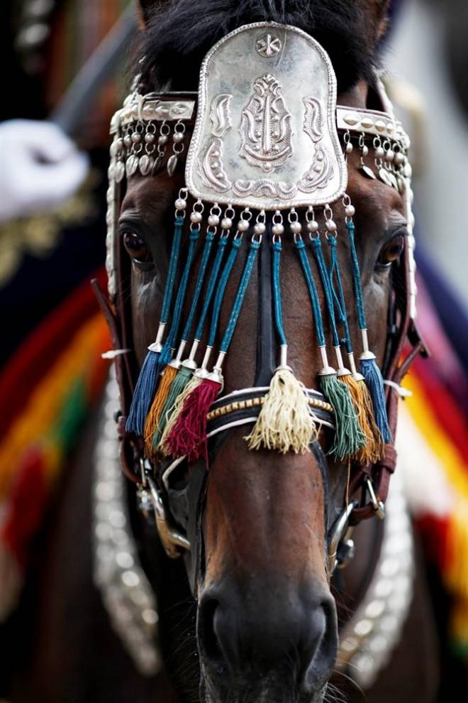 6) Конь в украшениях во время фестиваля  Алка в городе Синь на юге Хорватии. Алка представляет собой турнир по верховой езде, который с 1715 года проходит каждый август в хорватском городе Синь, в ознаменование победы над Османской Империей. (Damir Sagolj/Reuters)